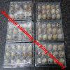 China Clear Plastic Quail Egg Cartons Reutilizável