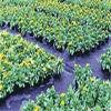 Tissu tissé par pp de lutte contre les mauvaises herbes/Tissu d'aménagement
