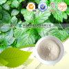 Het Uittreksel /80 % van Gynostemma van Jiaogulan 98% Gypenosides
