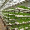야채를 위한 정원 온실 꽃 온실