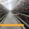 Гальванизированное рамкой автоматическое оборудование цыплятины для слоя