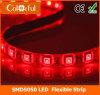 Nueva tira caliente de la anchura LED de DC12V SMD5050 5m m