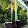 Decoración vertical viva de la pared del jardín de la hierba