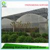 Chambre verte de film hydroponique multi d'envergure pour la fraise