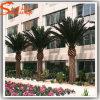 Palmeira artificial da data da fibra de vidro da manufatura de Guangzhou