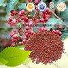 Natürliches Spice Hua Jiao Pepper oder Sichuan Pepper