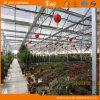De Serre van het Glas van de multi-spanwijdte die voor het Groeien van Bloemen wordt gebruikt