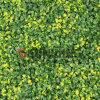 Rete fissa artificiale su ordinazione dell'erba di segretezza del giardino della barriera