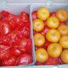 O mandarino fresco da colheita nova