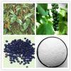 Extracto natural el 100% Piperine puro de la pimienta negra