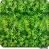 Da impressão verde de transferência da água da árvore de Tsautop Tsh5580 película dos gráficos hidro