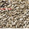 Sementes 2012 da semente do girassol da padaria (orgânicas e natureza)