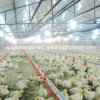 Chicken Farm를 위한 가득 차있는 Set Automatic Poultry Equipment
