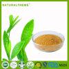 Выдержка зеленого чая 2017 горячих новых продуктов органическая