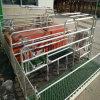 Caisse de cochonnée galvanisée à chaud pour le matériel de ferme de porcs pour la cochonnée