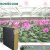 Garniture de refroidissement enduite noire de Brown pour la plantation de serre chaude d'orchidée de guindineau