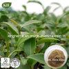 صانية طبيعيّ [أولونغ] شاي مقتطف [فولفنولس] 20%, 60%, 80%