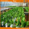 Chambre verte solaire à haute production pour l'élevage de fraise