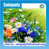 Садовнический стеклянный парник для растущий цветка