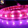 Color del RGB de la tira del alto voltaje 220V&110V 5050 LED