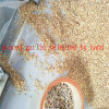Ail de granule haché choisi à la main pour assurer la qualité