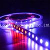 IC2811 5050SMD RGB 300LEDs por tira flexible de la raya LED del carrete