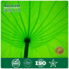 Het Uittreksel van het Blad van Lotus voor het Uittreksel van de Installatie Nuciferine van Slimming/98%