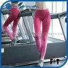 여자 단계적인 색깔 Ombre 단단한 요가는 운동을%s 각반을 헐덕거린다