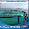 Baixo de mar/de brema/garoupa de mar gaiola da exploração agrícola para a piscicultura de mar profundo