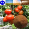 鉄のアミノ酸のキレート化合物の有機肥料(ああ)