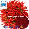 Los fabricantes suministran rojo natural de los chiles del tinte del pigmento