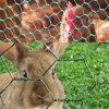 PVC上塗を施してある表面のウサギのケージの六角形の金網