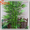 Árvore de bambu afortunada decorativa da planta do fabricante profissional