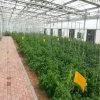 Invernadero Growing de la PC para la lechuga de Nft del hidrocultivo