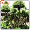 Hoge Imitatie Kunstmatige Topiary Installatie op het Natuurlijke Topiary Landschap van de Verkoop