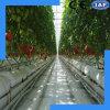 Le taux de survie est système agricole très élevé de culture de l'eau
