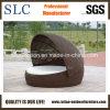 Salotto di Sunbed del salotto del rattan di /Round del Daybed del rattan (SC-B6020)