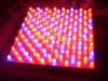Il LED si sviluppa chiaro (55W LED coltivano le luci di pannello)