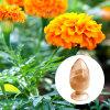 Precio de la luteína del suplemento del ojo de la luteína de la zeaxantina de la luteína de las vitaminas del ojo del comerciante
