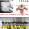 Les constructions se penchent le muscle Drostanolone stéroïde cru E