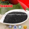 Удобрение выдержки Seaweed органическое с низкой ценой
