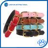 Colares de couro acolchoados clássicos básicos do animal de estimação para gatos/cães