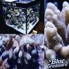 Korallenrotes Seesalzwasser-Aquarium-Fische