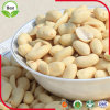 Núcleos blanqueados enteros asados del cacahuete