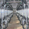 Cabra Milking System Parlor para Milking Goat