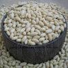 De hete Verkoop Gebleekte Pitten van de Pinda van Shandong China