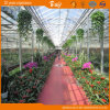 Film di plastica Green House per Planting Vegetables e Flowers