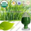 Polvere organica cinese dell'erba di orzo del fornitore 100%