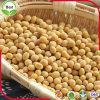 有機性大豆または大豆黄色い