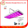 LED Grow Lights High PAR Value Espectro completo impermeável 168 * 3 Watt LED Grow Lights for Cucumber Growing